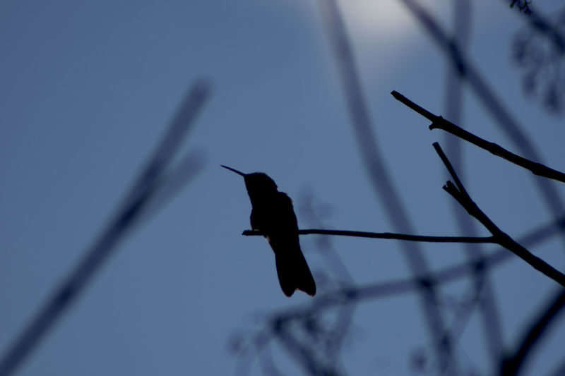 Low angle view of bird perching on pole against sky