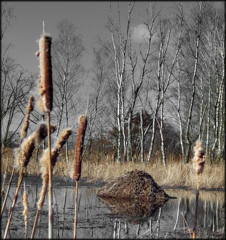Biber im Hiller Moor Biber Biberbau Effects & Filters Hüpapics Kunst Ist Was Du Daraus Machst EyeEm Best Shots Moor  Hille