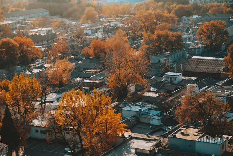 Aerial view of trees and buildings in city
