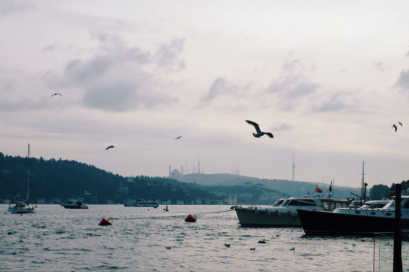 City View  Landscape Beautiful Nature Architecture Istanbul EyeEm Gallery EyeEm Best Shots City View  Seagull Traveling Eye4photography  Winter City Life Bird Animal Animal Themes Sky Animals In The Wild Flying Water Nautical Vessel Beauty In Nature No People Nature Cloud - Sky Sea
