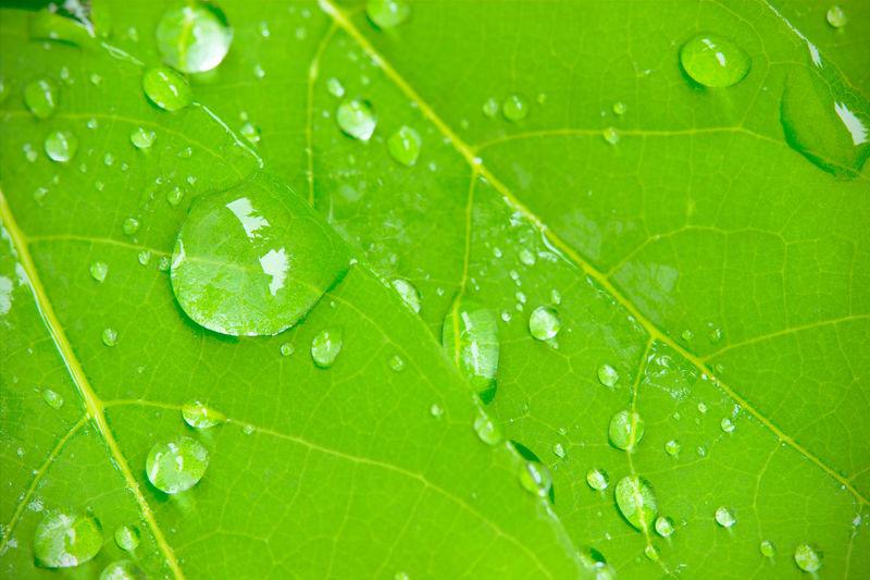 Macro shot of wet leaf