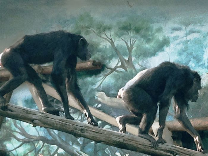 恋人? 親子⁉︎… なかよし組 Chimpanzees Nature_collection The animals which are fun to look なんちゃってfeel-good