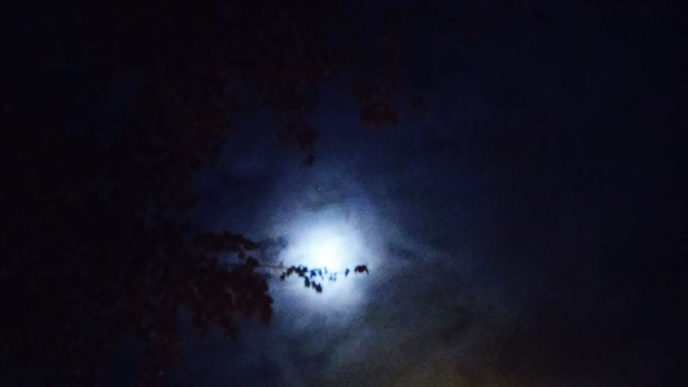 Moon Light Moonphotography Moon Night Sky The Darkness Takes Over Trees In The Night
