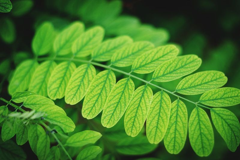 Green Color Nature Photography WeekOnEyeEm Leaf Green Color Plant Part Growth Close-up Plant Nature Beauty In Nature Focus On Foreground Herb Day Selective Focus Sunlight Pattern Natural Pattern Leaves