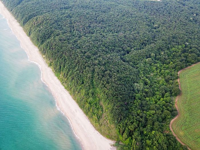 Aerial Travel High Angle View Beach Forest Beauty Coastline Aerial View Water Tree Beach Backgrounds Sand Field High Angle View Calm Ocean Coast Sandy Beach Rocky Coastline The Great Outdoors - 2019 EyeEm Awards