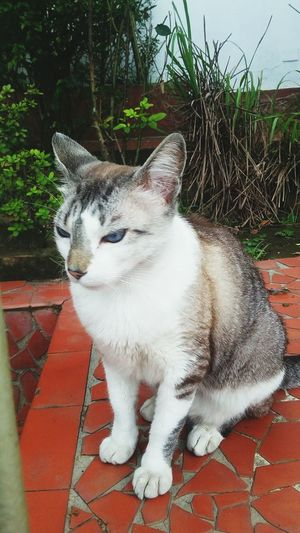 Cats Gatos Folgados Gatosfelizes Animais Pacion