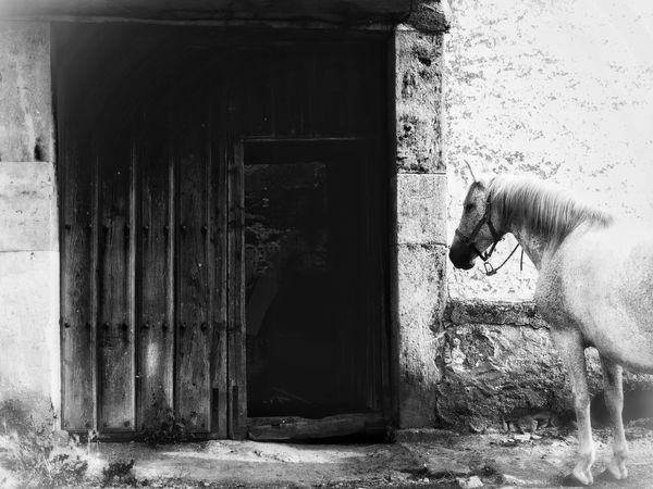 Welcome To Black Blackandwhite Black And White Mammal Animal Themes Domestic Animals Built Structure Antique Door Stable Horse Doorway Rural House Village Life Farm Life Farm Animals Rural Scene Horse Life Horses Rural Architecture Stable Door Farm Rural Life Livestock Architecture Black And White Friday