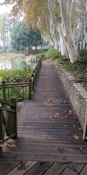 Boardwalk amidst trees