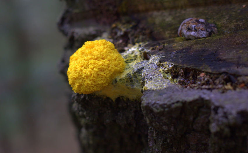 Close-up of yellow moss on tree trunk