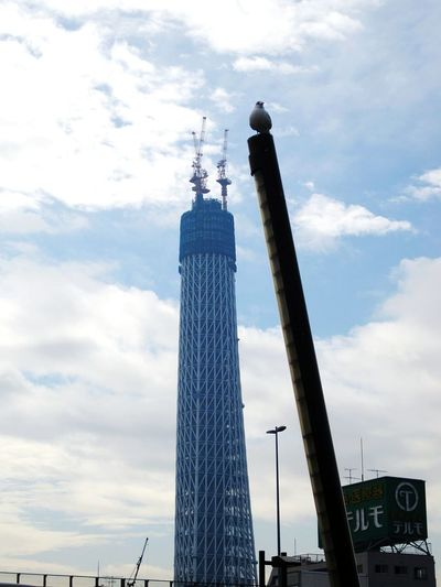 SkytreeⅣ No composite Sky Architecture Tower Japan Urbanphotography Nature Japan Culture