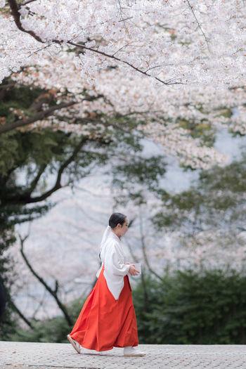 Sakura Shinto.