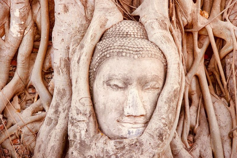 Close-Up Of Buddha Statue In Tree Trunk