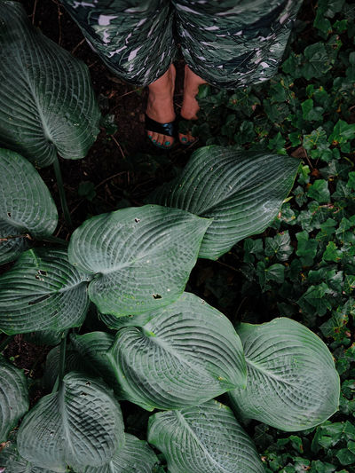 Low Section Of Woman Standing Amidst Plants