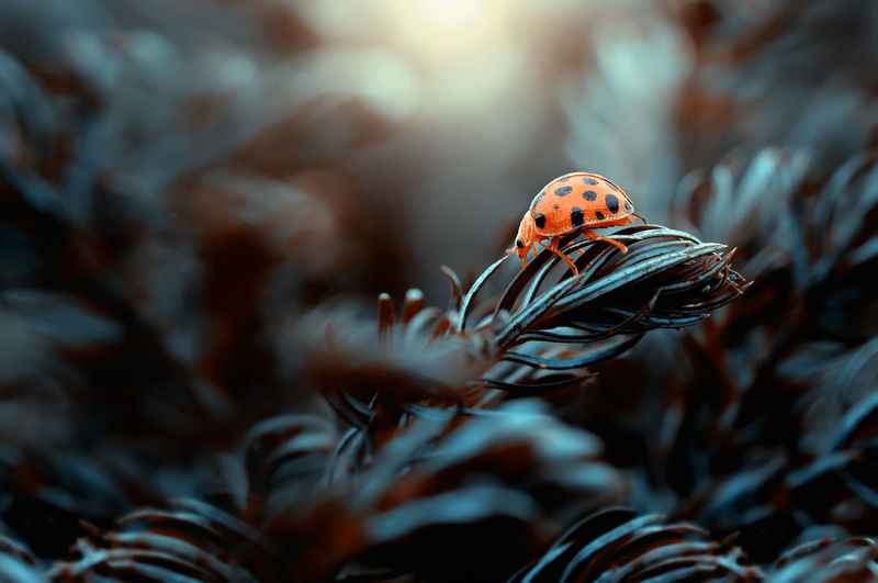 Ladybug on the plants
