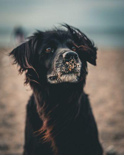 Pets Portrait Dog Ear Summer Protruding Nose Animal Hair Animal Nose Animal Eye Animal Body Part Animal Head
