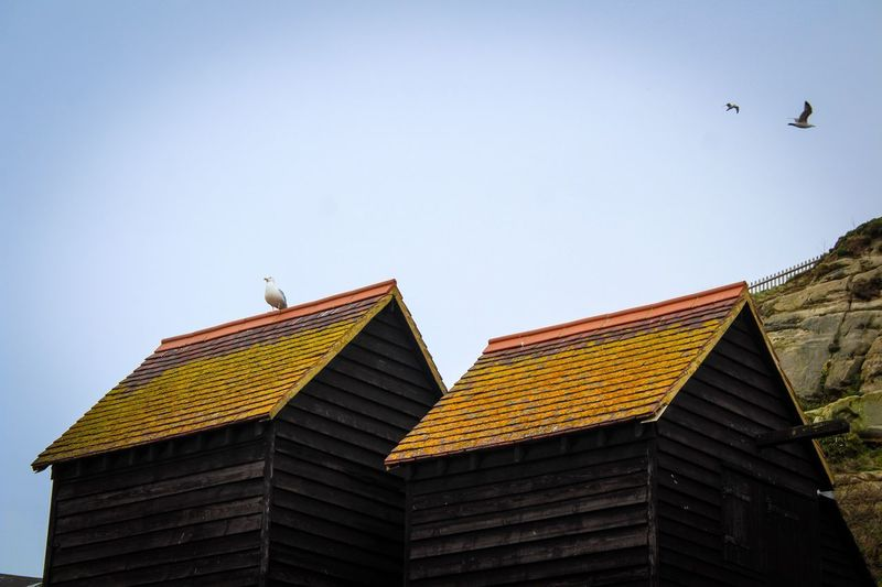 Smoke House Roof Top Seagull Architecture Built Structure Building Exterior Animal Themes Animal Sky Bird Low Angle View Building Animals In The Wild Animal Wildlife Roof Clear Sky No People Flying Nature Day Group Of Animals Roof Tile