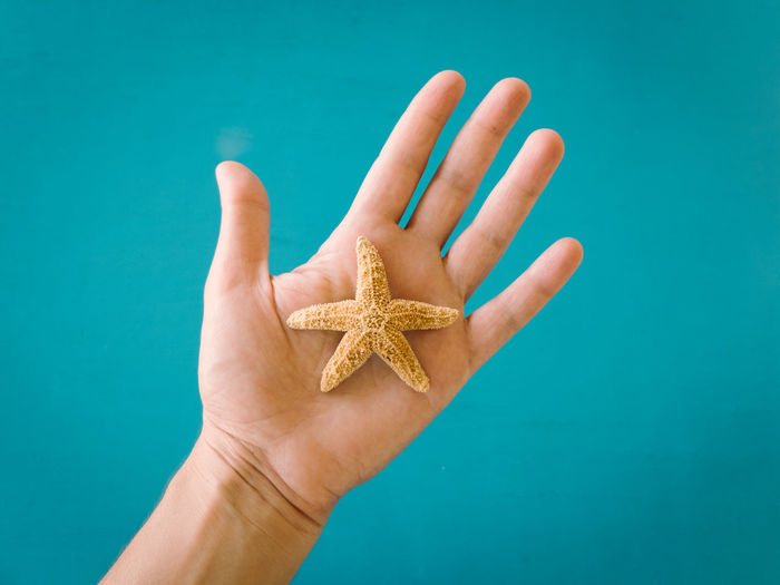 Cropped image of hand with starfish against turquoise wall