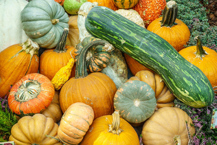 Various type of pumpkin Autumn Close-up Day Food Food And Drink Freshness Gourd Halloween Healthy Eating Market No People Outdoors Pumpkin Raw Food Squash - Vegetable Variation Vegetable