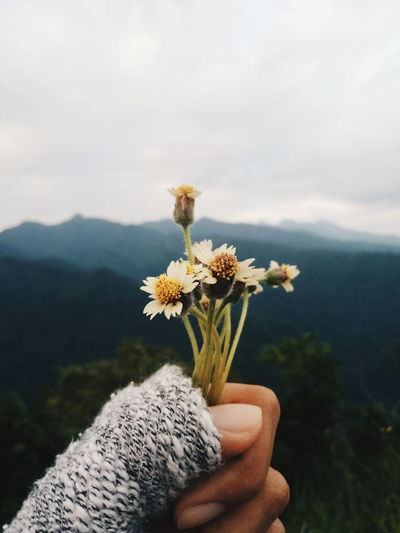 Midsection of person holding flowering plant against mountain