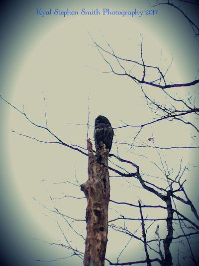 Bird perching on bare tree against sky