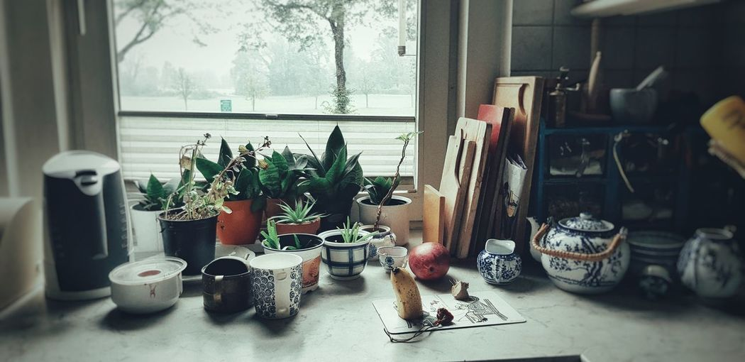 kitchen Still Life EyeEm Best Shots Vase Pinteresting Home Interior Window Window Sill Window Frame Potted Plant Pot