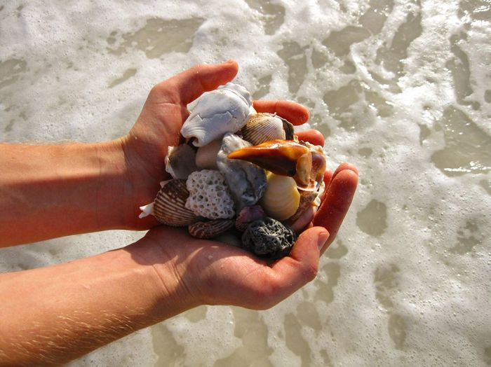 Shells in Hand