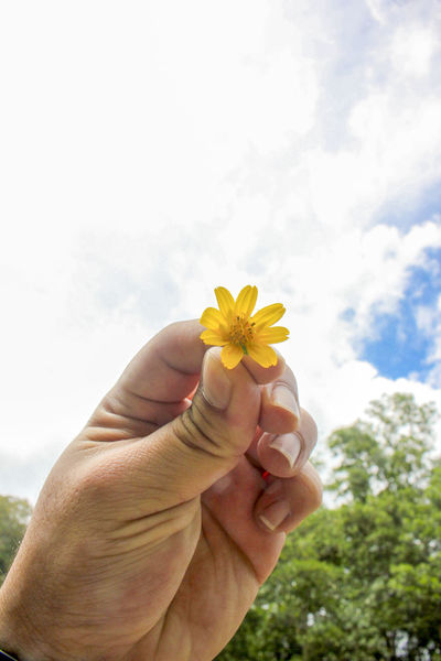 Beauty In Nature Close-up Day Flower Flower Head Fragility Freshness Hand Holding Flower Holding Human Body Part Human Finger Human Hand Lifestyles Nature One Person Outdoors Palm Personal Perspective Real People Sky Yellow Yellow Flower