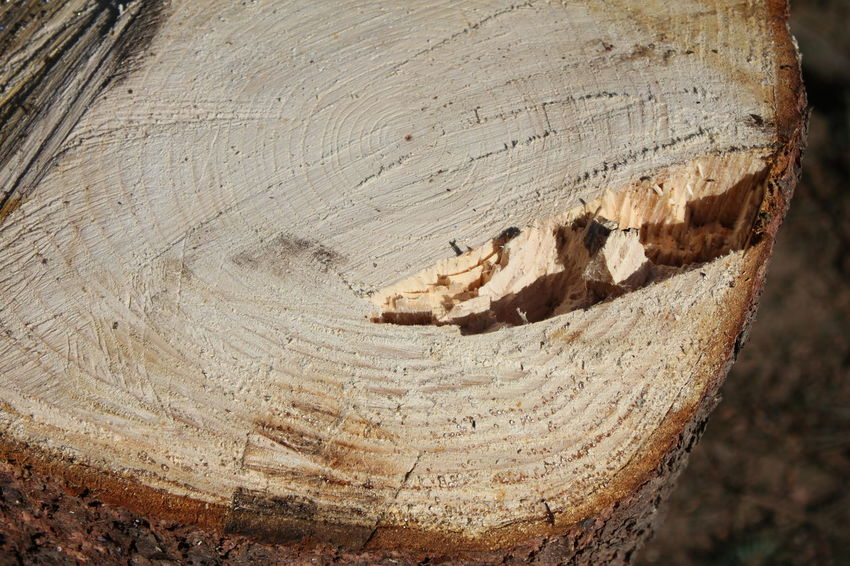 Count the annual rings Annual Growth Ring Annuli Annulus Close-up Day Growth Ring Growth Rings Log Nature No People Outdoors Tree Tree Ring Tree Ring Pattern Tree Rings Tree Stump Wood Year Rings
