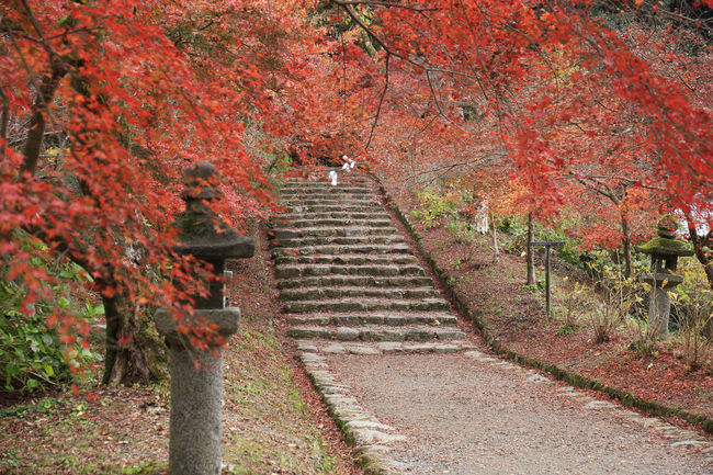 Architecture Autumn Autumn Collection Beauty In Nature Built Structure Change Day Direction Growth Leaf Nature No People Orange Color Outdoors Plant Plant Part Staircase Steps And Staircases The Way Forward Tranquility Tree