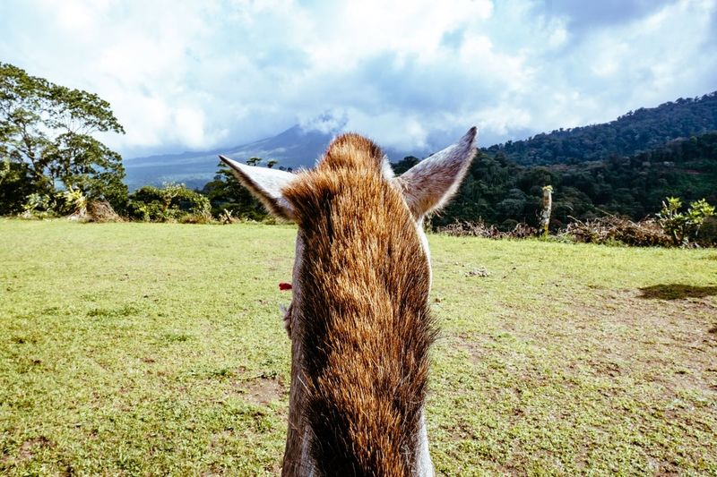 View of Volcano Arenal  from Horseback Riding in Costarica Beautiful Explore Adventure Jungle Rainforest Travel Traveling Travel Photography Costa Rica EyeEm Best Shots EyeEm EyeEm Nature Lover Sublime Living First Person View Feel The Journey