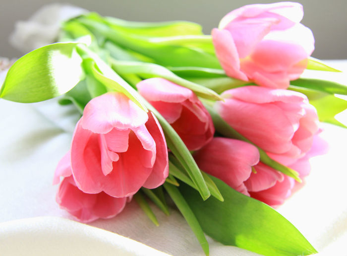 Flower Flowering Plant Freshness Plant Close-up Beauty In Nature Pink Color Vulnerability  Petal Fragility Inflorescence Nature Flower Head Leaf Plant Part No People Tulip Indoors  Green Color Selective Focus Flower Arrangement Bouquet Bunch Of Flowers Spring Concept