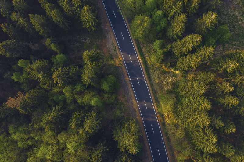 Aerial view of road amidst forest