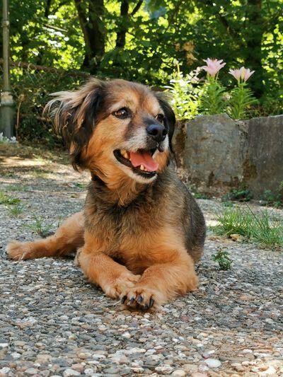 Smile Pets Dog