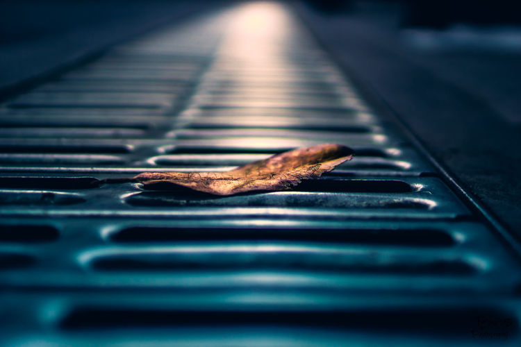 Close-up of dry leaf on drain