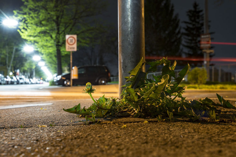Fallen Plant By Pole On Illuminated Road At Night