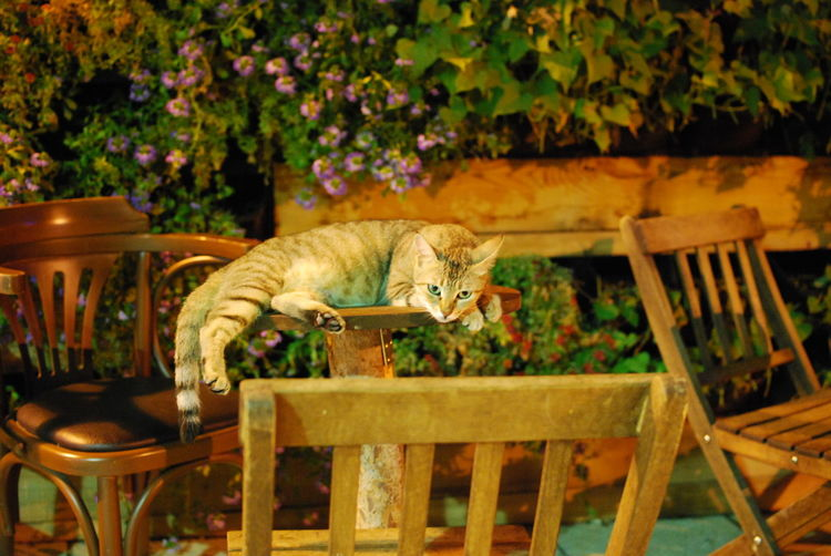 Cat sitting on chair by table
