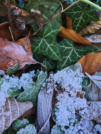 50/50 Nature Outdoors Leaf Freshness Close-up Beauty In Nature Spring Early Winter