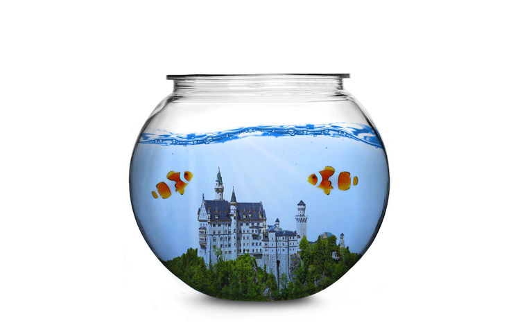 Aquarium Creativity Fish Fishbowl Imagination Nature Nature Studio Shot Underwater Water White Background