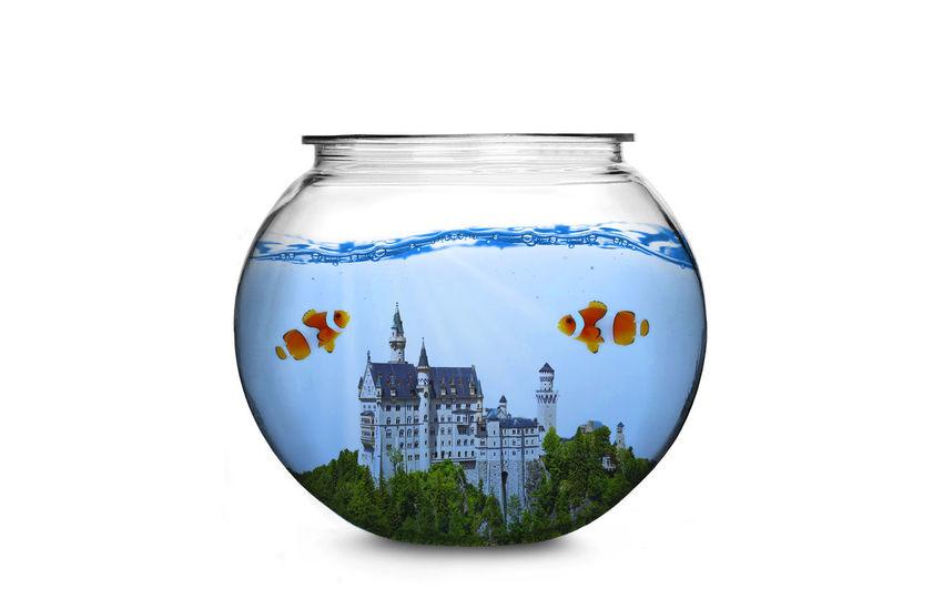 Aquarium Creativity Fish Fishbowl Imagination Nature Nature Studio Shot Underwater Water White Background