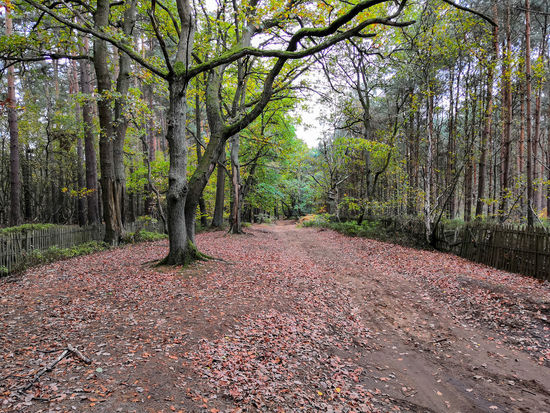 English woods Honor 10 United Kingdom Tree Leaf Grass Fall Autumn Fallen Autumn Collection Dry Falling Leaves Growing Change Tree Trunk Woods Treelined Fallen Leaf Pathway