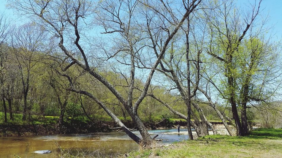 Tree Water Branch Sky Green Color Rippled Tranquil Scene Stream Countryside Tranquility