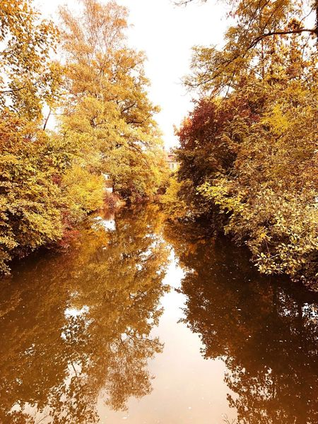 Autumn Tree Plant Beauty In Nature Water Sky Reflection A New Beginning