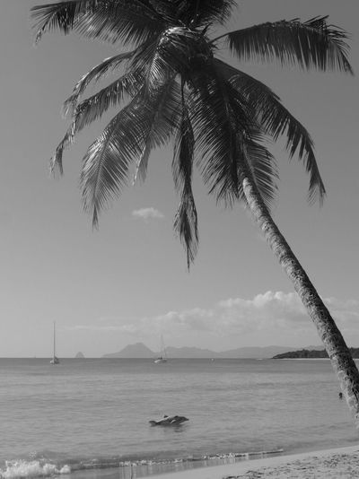 Travel Destinations Martinique Sainte Anne Les Salines Beach Sea Water Palm Tree Nature Horizon Over Water Scenics Sky Tranquility Tranquil Scene No People Beauty In Nature Outdoors Day Tree Nautical Vessel Sand Blackandwhite