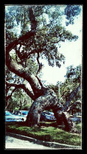 Treegasmic Tuesday Eye Em Best Edits Eye Em Nature Lover Tree