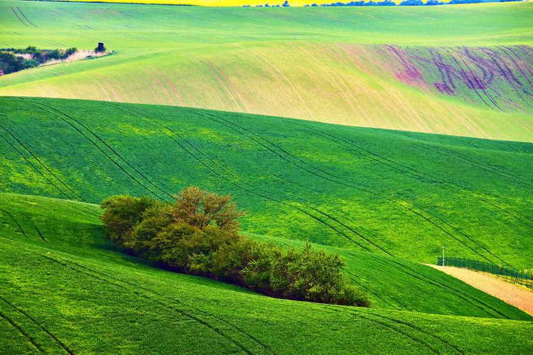 Landscape Plant Environment Scenics - Nature Tranquil Scene Land Green Color Tranquility Beauty In Nature Grass Field Rural Scene Nature Tree No People Hill Agriculture Growth Idyllic Day Outdoors Rolling Landscape Spring Moravia Farmland Rural
