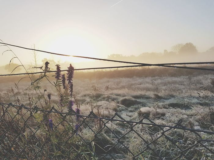 Nature Outdoors Sky Protection Beauty In Nature No People Day Rural Scene Sunrise Mist Misty Morning Smartphonephotography S8+ S8plus S8Photography S8 Collection Smartphone Photography Close-up Morning Lonliness Desolation Fence Wire Defocused Nature