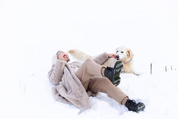Dog lying on snow covered landscape