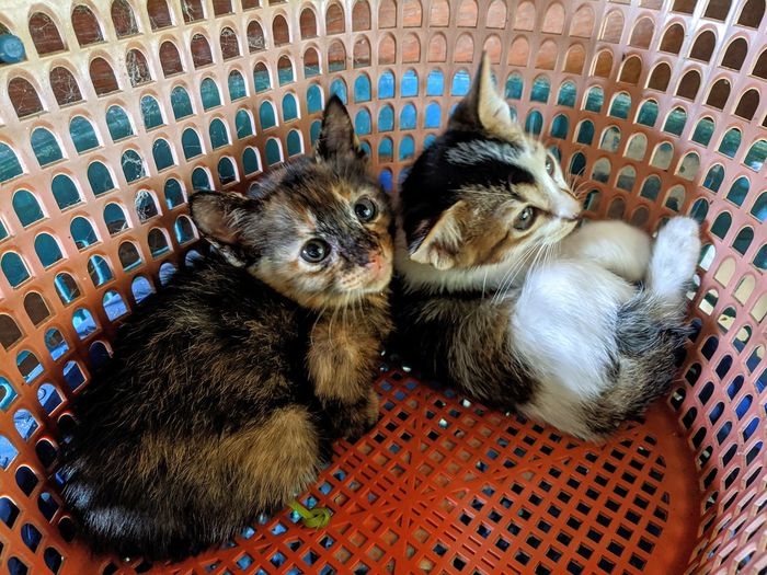 High angle view of cats in basket