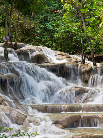 Dunns river falls flowing in rain forest Beauty In Nature Nature Outdoors Waterfall Falls Dunns River Falls Dunns Falls Stone Water Falling Water Rocks Tropical Tropical Forest