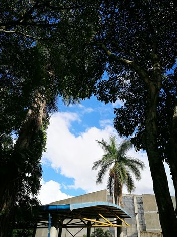 Tree Sky Low Angle View Nature No People Growth Outdoors Palm Tree Branch Beauty In Nature Vertical Day P9 P9photography HuaweiP9 Low Angle View Horizontal University Campus University Skyscape Urban Urban Geometry Urban Forest